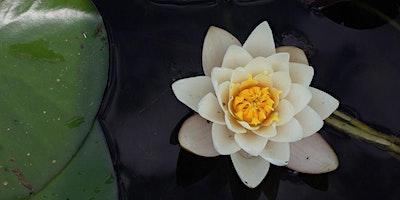 Aprendendo a Meditar – 2ª Edição