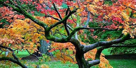 The Art of Pruning Japanese Maples tickets