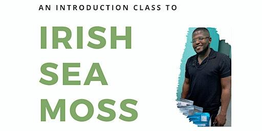 An Introduction to Irish Sea Moss