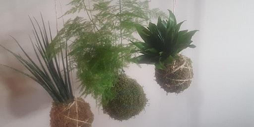 Hanging Garden - Japanese Moss Balls
