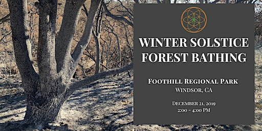 Winter Solstice Forest Bathing