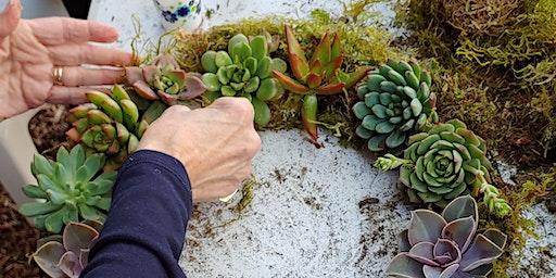 Succulent Wreath Workshop