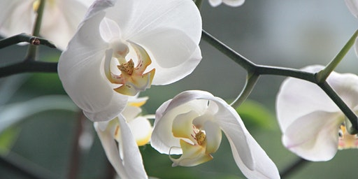 Flowering Indoor Plants: Care & Selection - CH