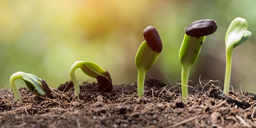 Seeds & Seed-Starting for Beginners: Featuring Hudson Valley Seeds - CH