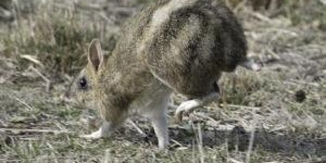 Junior Rangers Bouncing Bandicoots- Point Nepean National Park tickets
