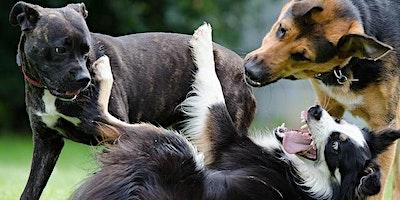 Dogs Behaving Better – Adult Event