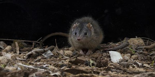 Junior Rangers Mammal Mania- Grampians National Park
