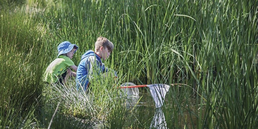 Junior Rangers Minibeast Discovery- Creswick Regional Park