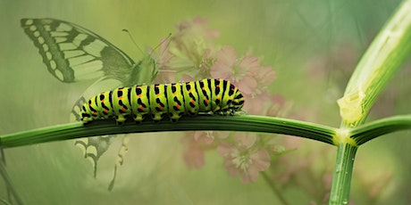 Green Living Workshop: Pests, Predators and Companion Planting at Palmdale tickets