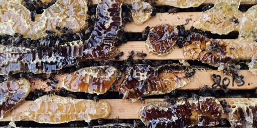 Winter Bee Lectures – session two – products of the hive