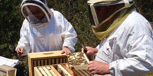 Winter Bee Lectures – session three – keeping the bees