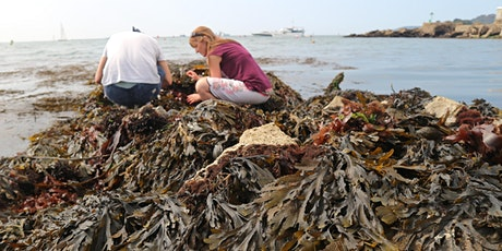 Short Course: Introduction to Seaweed and Seaweed Pressing tickets