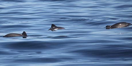"""SeaWatch Survey - Hurlstone Point """"Porpoises and Poetry"""" tickets"""