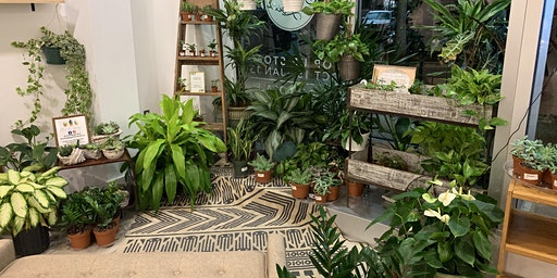Seminar: Interior-scaping with Houseplants