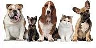 Pets and the Oils -  Use and Delivery
