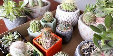 Success with Indoor Succulents & Cacti - BP tickets