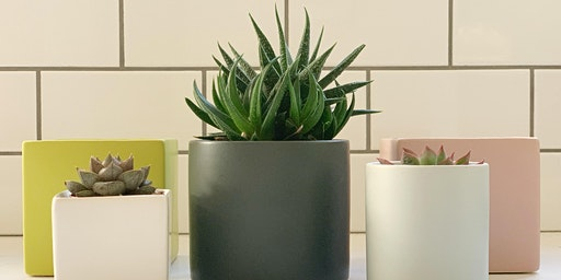 Succulent Arrangements with The Modern Planter + Kataphora Boutique