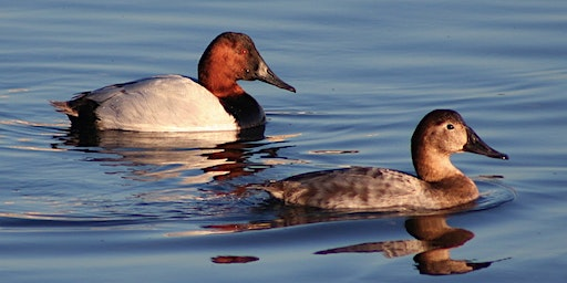 Shiver on the River Winter Birding