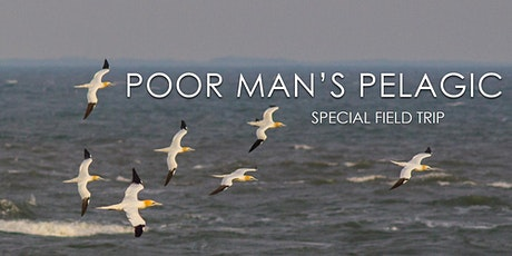 Poor Man's Pelagic tickets