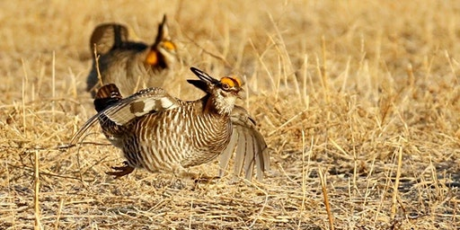 2020 Prairie Chicken Dance Tours