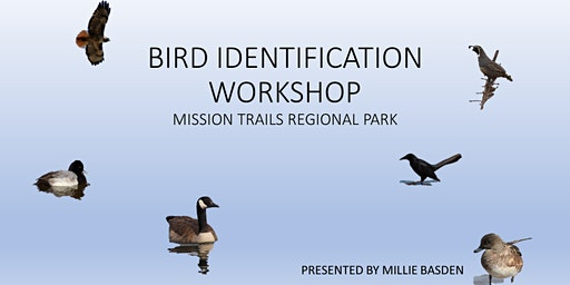 Mission Trails Regional Park Bird Identification Workshops