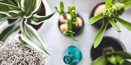 Mieux connaître les plantes d'intérieur tickets