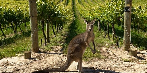 Australia Day & Waitangi Day Wine tasting with Aussie BBQ tasters!