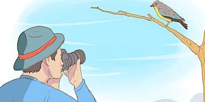 Learn to Birdwatch