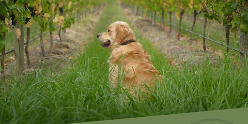 Tails & Tastings at Waterbrook Winery