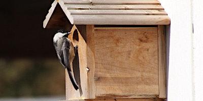 Choosing the Right Nest Box