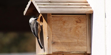 Choosing the Right Nest Box tickets
