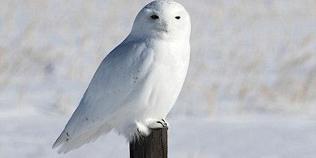 Snowy Owl Prowl tickets