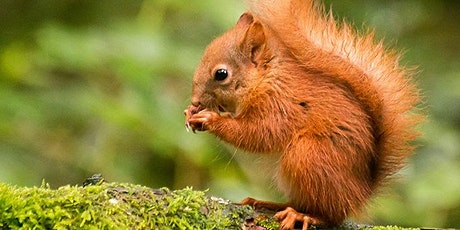 Photography Experiences - Red Squirrels (2020) tickets
