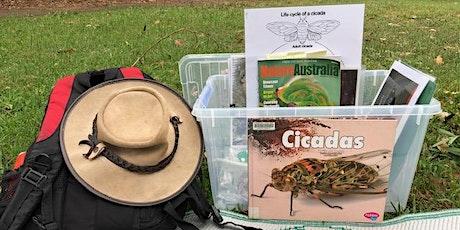 Lane Cove Bush Kids - Cicada Days tickets