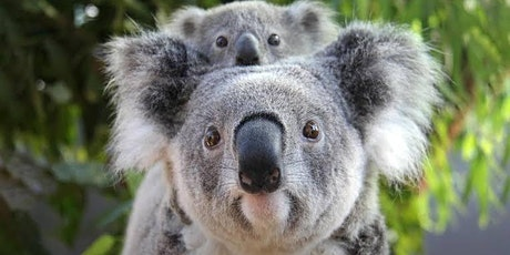 Urimbirra Wildlife Park & Victor Harbor day tour tickets