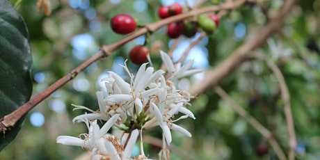 Increasing Coffee Yields through Soil Health tickets