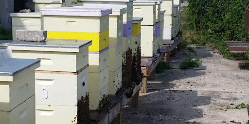 Spring Management of Honeybee Colonies - Beekeeping