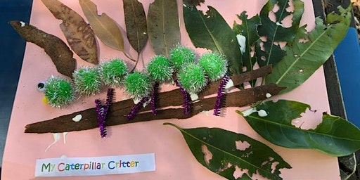 Lane Cove Bush Kids - Ordinary Caterpillar