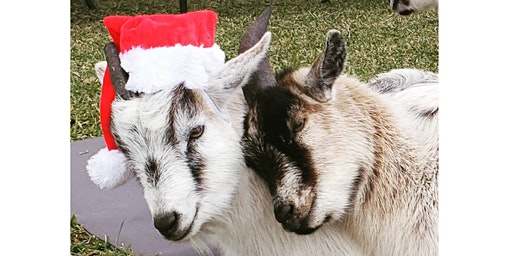Goat Yoga Texas - Sun, Dec 15 @ 10:30AM