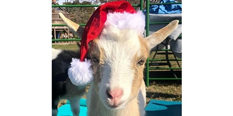 Christmas Goat Yoga - Brunch'n Goats! - Sun., Dec. 22 @ 11AM tickets