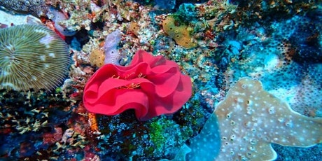 Coral Reefs - Dive Right In @  Manning tickets