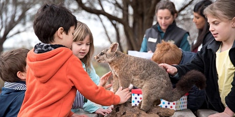 Junior Ranger A Natural History of the Murray - Merbein Common tickets