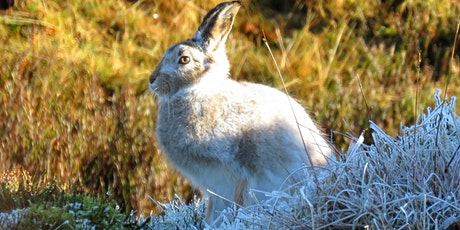 Mountain Hare Photography Experience, Peak District tickets