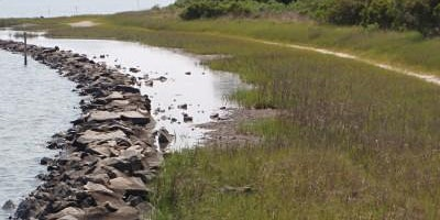 Living Shorelines for Residents