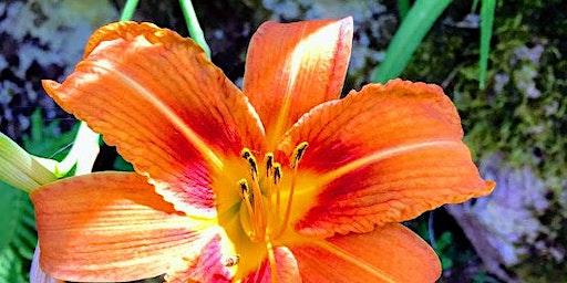 Celebrating Summer:  A Mindfulness Day Retreat