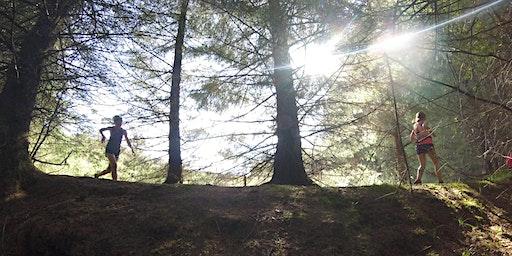 Twilight Trail Run: Sawley (12km)