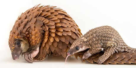 Breakfast with the Pangolin Saturday, February 8, 2020 tickets