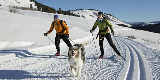 Winter Sports with Your Dog (w/local vet Dr. Bronwyn Fullagar)