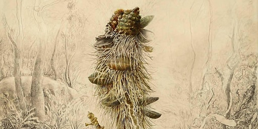 Native Plant Illustration