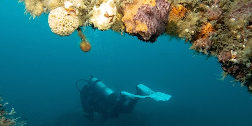 Learn to dive! - PADI Open Water Diver Course